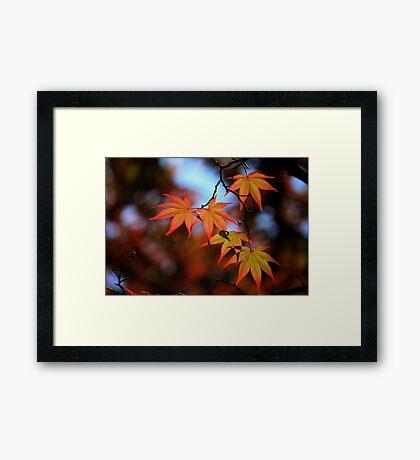 Leaf dance Framed Print