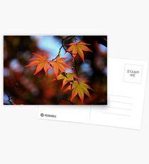 Leaf dance Postcards