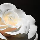 White Rose by Diego Re