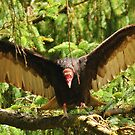 VULTURE COMES FOR HIS PREY... by RoseMarie747