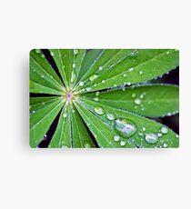 Lupin Leaf Canvas Print