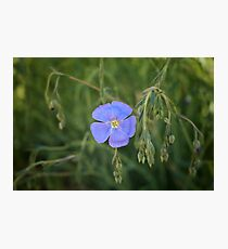 Red Rock Canyon Wildflower Photographic Print