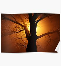 Abstract Sunset with Tree  Beautiful Nature Poster