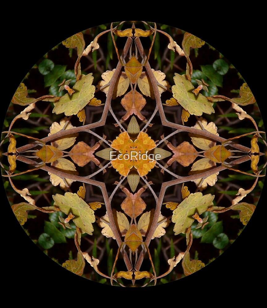«Perdido en el bosque Mandala» de EcoRidge