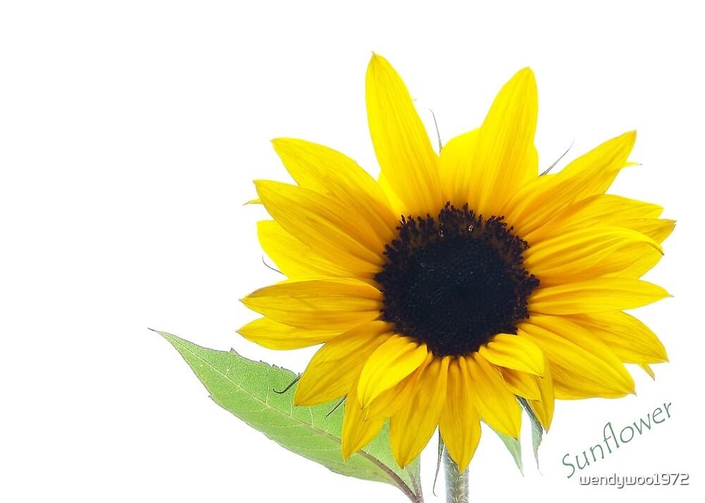 sunflower 2 by wendywoo1972