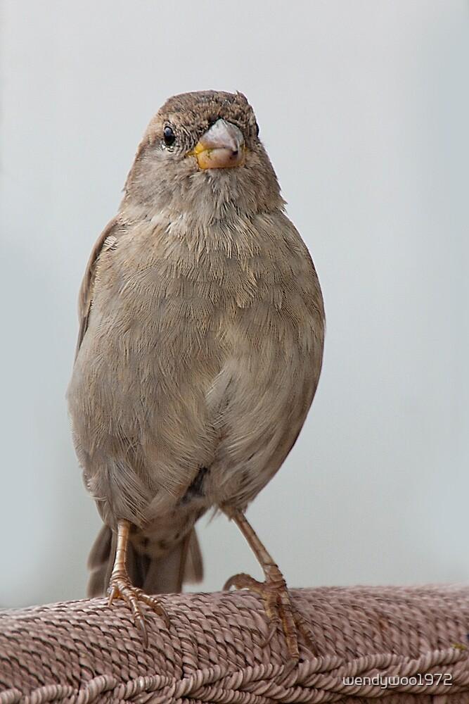 Pretty little bird by wendywoo1972