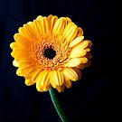 yellow by wendywoo1972