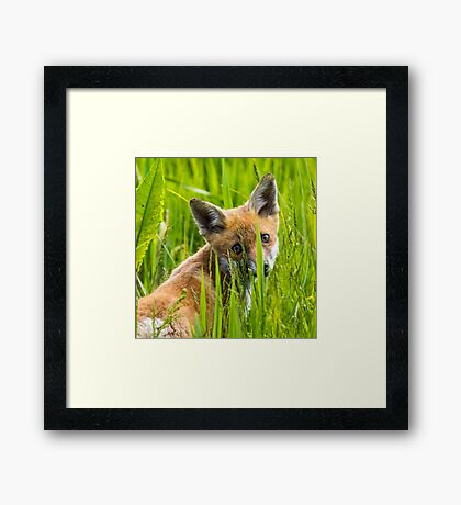 Fox Cub Framed Print