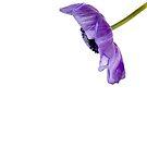 purple by wendywoo1972