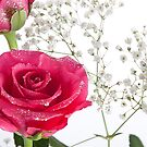 Pink sparkly roses by wendywoo1972