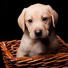 Puppy in a basket by wendywoo1972