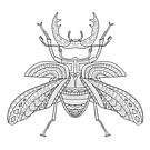 Patterned Stag Beetle by ShakeyIllustra