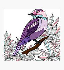 Purple bird vector illustration print Photographic Print