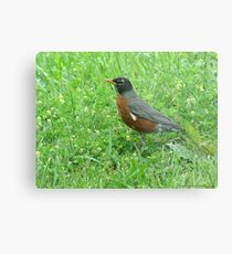 Robin Escorting Springtime  Metal Print