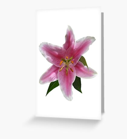 Single Stargazer Lily Greeting Card