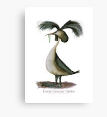 Great Crested Grebe - tony fernandes Canvas Print