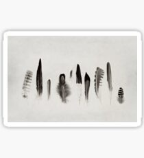 Feather Study no. 3 Sticker