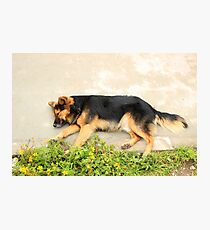 Brown Dog on a Sidewalk Photographic Print