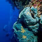 At the wall - Kimbe Bay, Papua New Guinea by Erik Schlogl