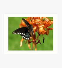 Dance Of Swallowtail and Tiger Lily Art Print