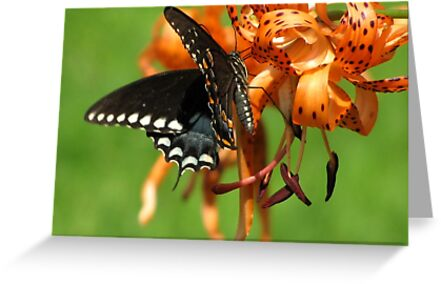 Dance Of Swallowtail and Tiger Lily by Jean Gregory  Evans