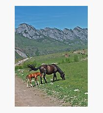 Wild horses: a mare and newborn foal Photographic Print