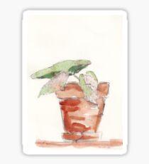 Begonia - foolproof? Sticker