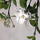 White Flowers by RosiLorz