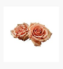 Two Peach Roses Photographic Print