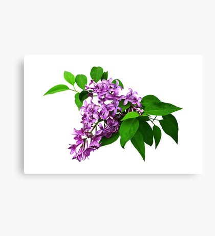 Lilacs and Leaves Canvas Print