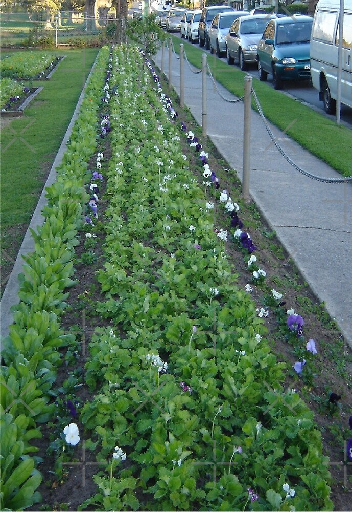 Pansies, Posts and Parked Cars by KazM