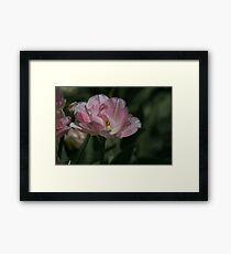 Silky Petals Framed Print