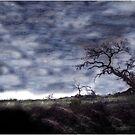 Appaloosa Grazing Beneath California Oak by Wayne King