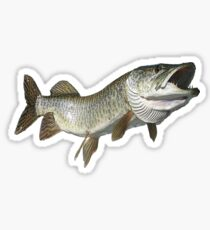 Toothy muskie Sticker