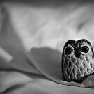 Unintentional Night Owl - The Flightless Fowl by Robert McMahan