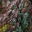 Nature's Patina by Kitsmumma