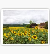 Sunflowers, Dordogne, France Sticker