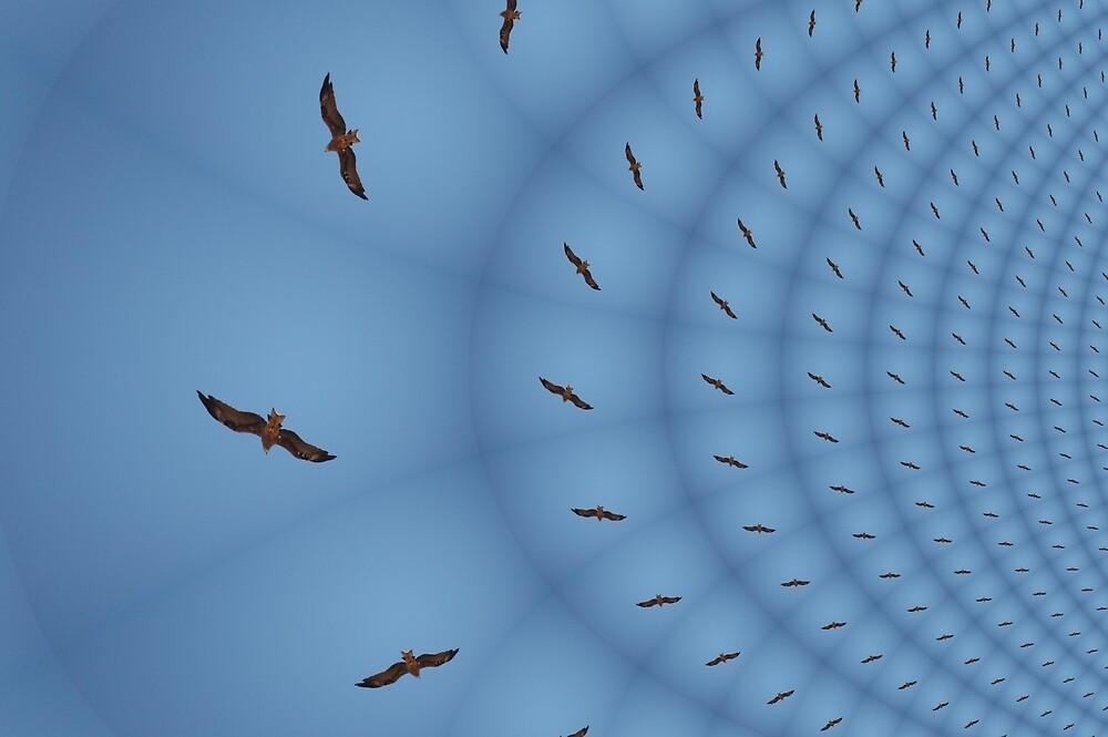 Circling Eagle by muz2142