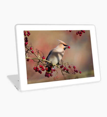 Waxwing with berry Laptop Skin