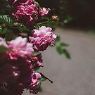 Garden Path no. 2 by Bethany Helzer