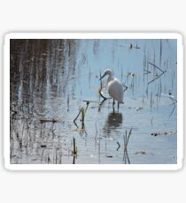 Little Egret: Grace  Sticker