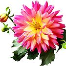 Vivid Pink and Yellow Dahlia by Susan Savad