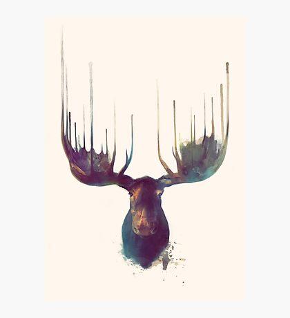 Moose Photographic Print