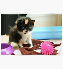 Tiny tortie Poster
