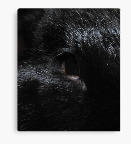 Gleaming Black Canvas Print