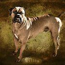 Wilson by Rhonda Strickland