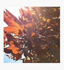 Maple Lens Flare Photographic Print