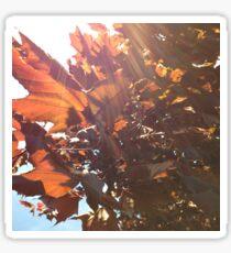 Maple Lens Flare Sticker