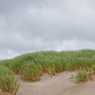 Sand Dunes and Grass by Jeff Goulden