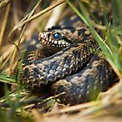 Snake in the Grass by Stephen Miller